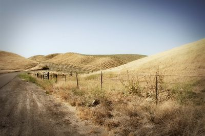 Golden Hills5